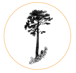 Black and white illustration of a tree